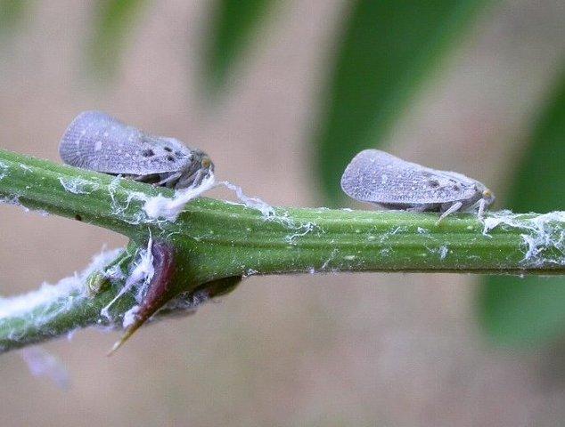 Parasites et maladies du printemps au jardin
