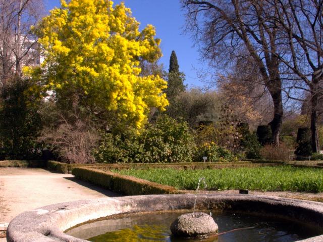 Mimosa (Des jardins beaux en hiver)