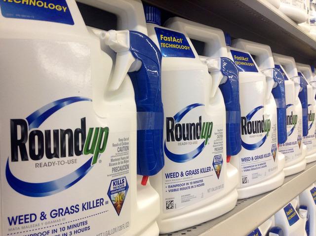 Mauvaises herbes résistantes au glyphosate du RoundUp