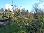 Diaporama : Des jardins beaux en hiver
