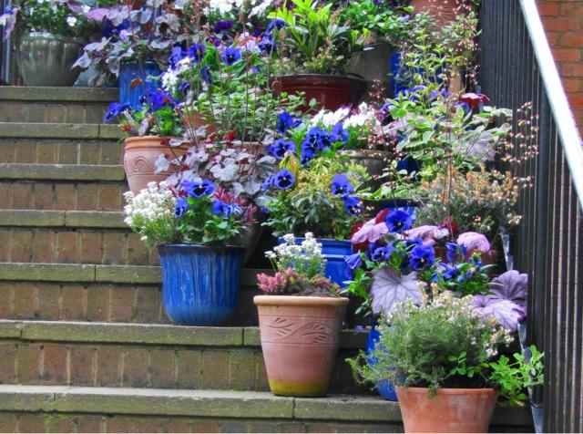 Pots dans un escalier (Jardins de pots)