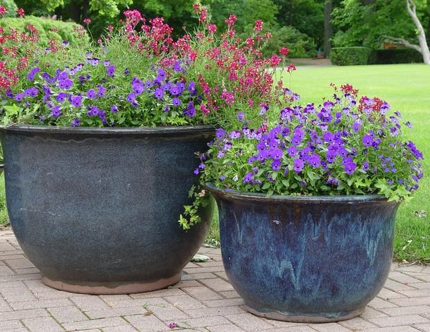Pensées dans deux gros pots laqués (Jardins de pots)