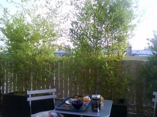Bambous plantés en bac sur une terrasse