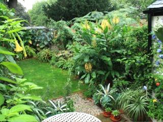 Hedychium dans un jardin exotique