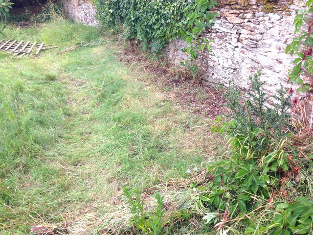 Jardin à l\'abandon, terrain en friche : nettoyage et ...