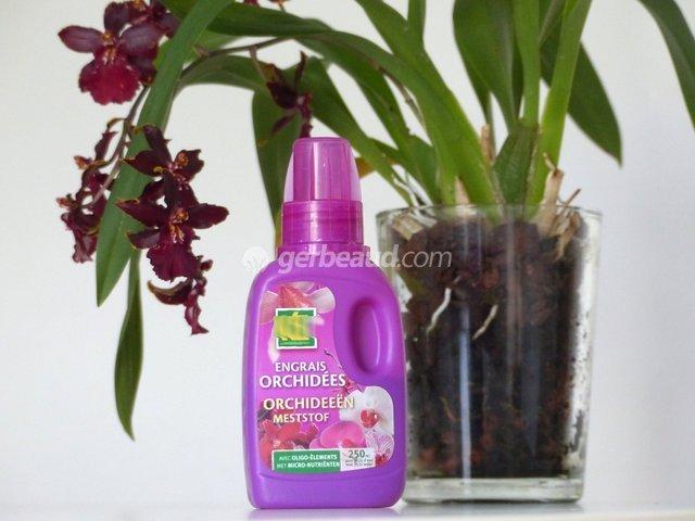 Entretien des plantes épiphytes : orchidées, tillandsias ...
