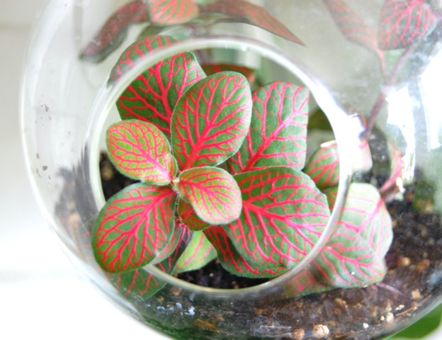 plante verte nervure rose