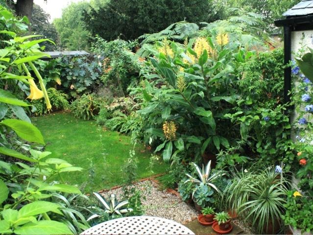 Hedychium for Jardin que planter