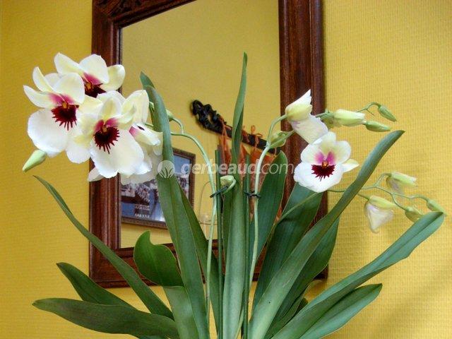 Orchidées : remise en forme