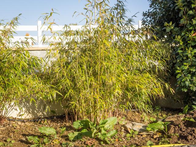 haie qui ne perd pas ses feuilles affordable ucpuejolie au dbut cette haie de thuyas plants. Black Bedroom Furniture Sets. Home Design Ideas