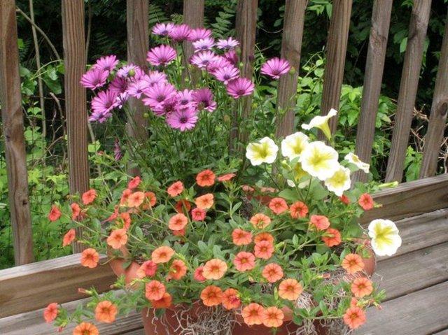 fleurs longues dur es pour jardini res plantes pour le. Black Bedroom Furniture Sets. Home Design Ideas