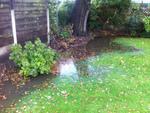Jardin trop humide: que faire?