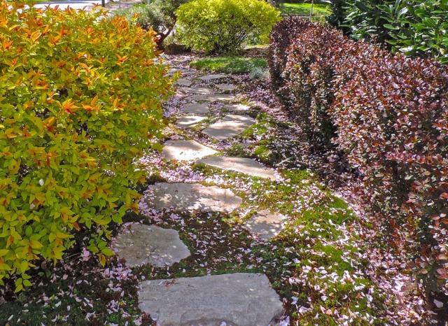 jardin japonais arbustes haie tout
