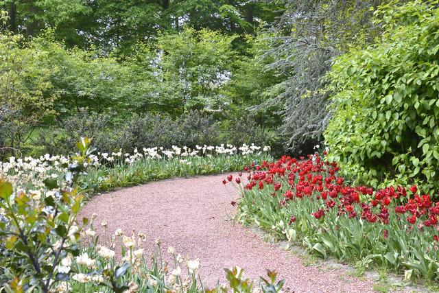 Allée gravillonnée bordée de tulipes