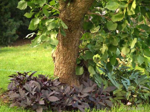 Comment mettre en valeur un arbre isolé du jardin