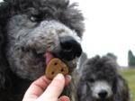 Quelles friandises donner à votre chien ?
