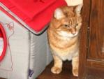 Aidez votre chat à bien vivre un déménagement