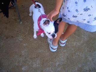 Enfant caressant un chien