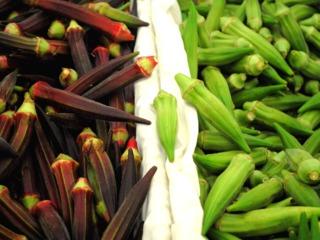 Gombo (okra) : variété rouge et variété verte