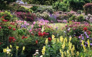 Générosité des floraisons dans un jardin anglais