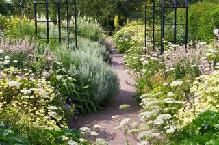 Que planter en bordure d'allée : sélection de plantes