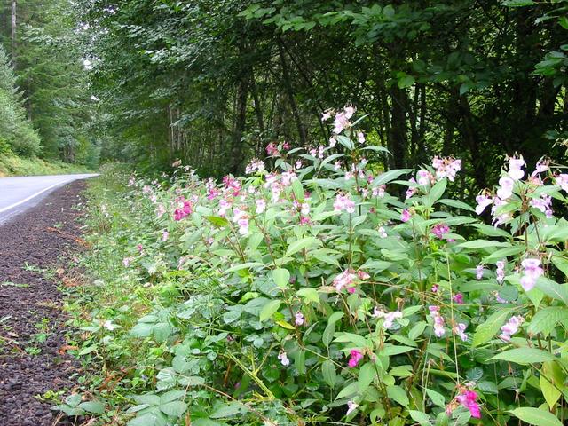 Les plantes exotiques sont-elles néfastes à la biodiversité ?