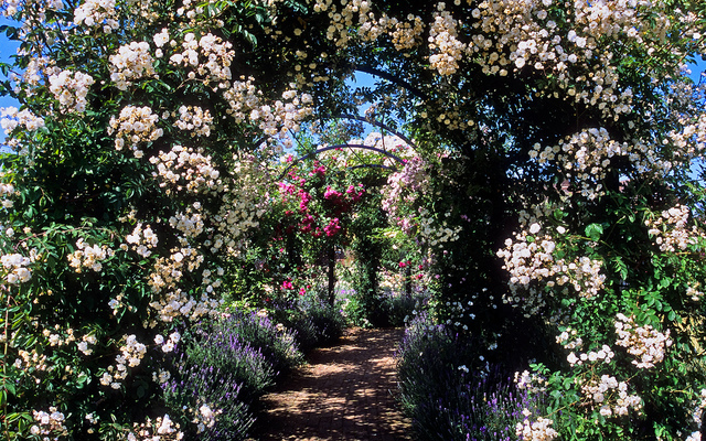 Rosiers grimpants sur une pergola jardins anglais for Les plus beaux jardins anglais