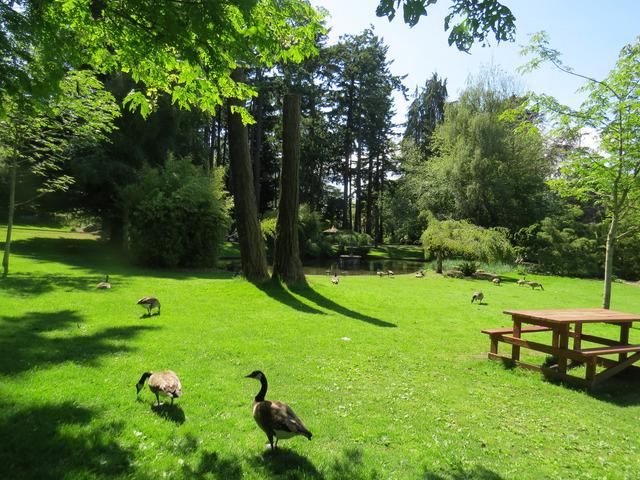 Petit jardin anglais jardins anglais for Circuit jardins anglais