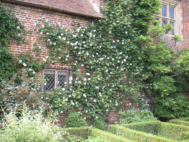 Plantes grimpantes persistantes for Auberge l autre jardin