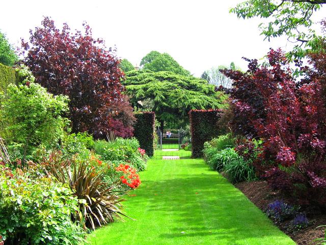 Contrastes de couleurs des feuillages  (Jardins anglais)