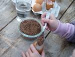 Dépose des graines sur le coton
