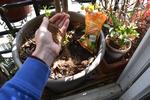 Savoir nourrir les plantes en pot