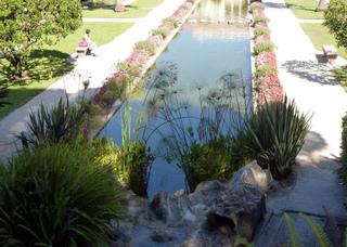 Plantes au bord d'un bassin