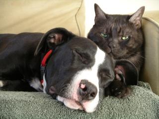 Chien et chat : cohabitation réussie