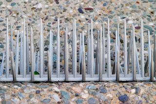Pics métalliques anti pigeons - Détail