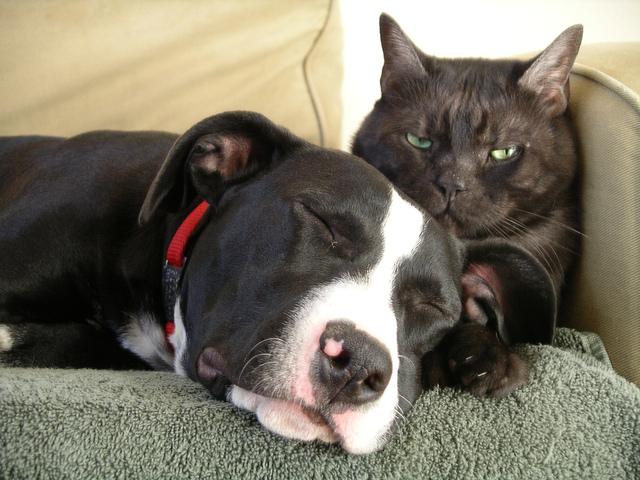 Chiens et chats : comment les faire cohabiter sous le même toit ?