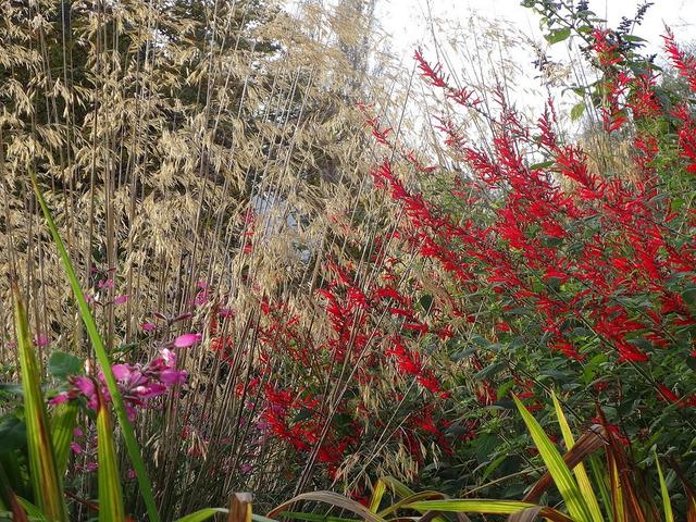 Jardin sauvage gramin es et sauge jardin sauvage for Quand tailler les graminees