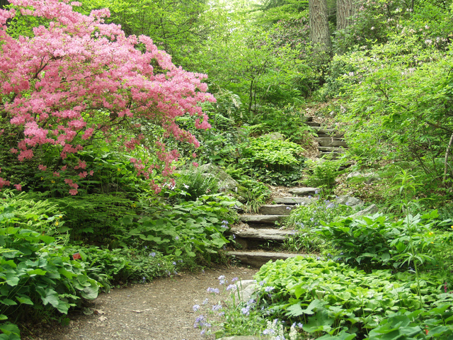 Escalier au milieu d'un jardin en sous-bois (Jardin sauvage)