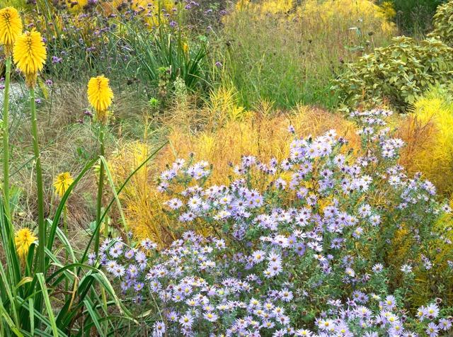 Asters et kniphofia jardin sauvage for Vide jardin 2016 la garnache