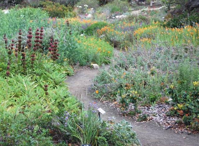 jardin que planter en hiver printemps que planter dans