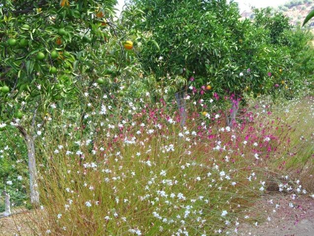 Prairie fleurie jardin sauvage for Jardin sauvage