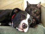 Chiens et chats: comment les faire cohabiter sous le même toit ?