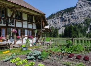 Légumes rustiques pour potager en montagne