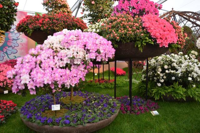 Floralies de Gand 2016 (Floralies de Gand 2016)