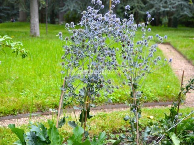 Tuteurage : quelles plantes, quels tuteurs ?