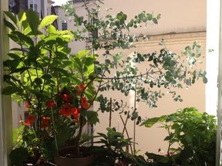 Magnolia, capucines et eucapyptus sur un bord de fenêtre
