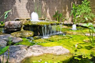 Algues vertes filamenteuses dans un bassin