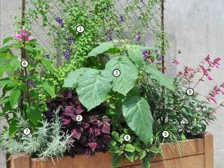 Jardinière d'été - composition