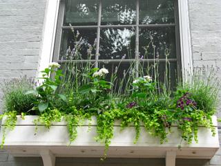 Jardiner en ville planter sur les rebords de fen tres - Support jardiniere pour fenetre ...