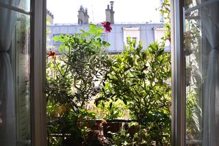 Jardiner en ville: planter sur les rebords de fenêtres